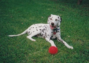 Dog Obedience Training - Cedar Rapids, Iowa