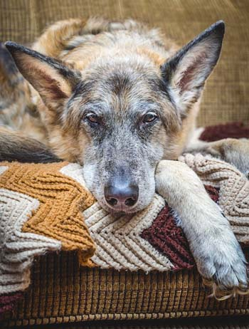 Choosing a Senior Dog