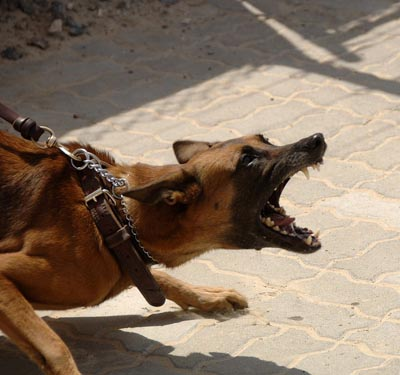 Avoiding Dog Attacks