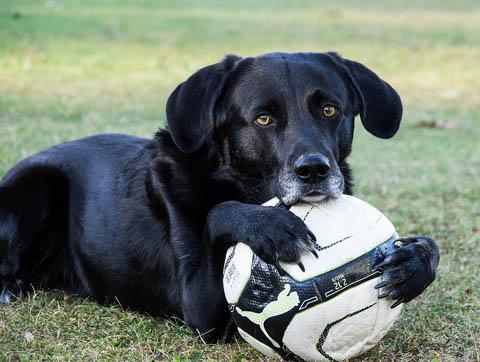 Doggie Daycare Service