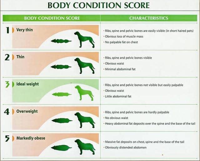 Dog Weight Body Score Chart