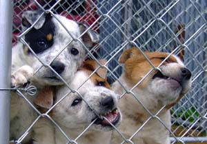 Death Row Dogs in a Shelter