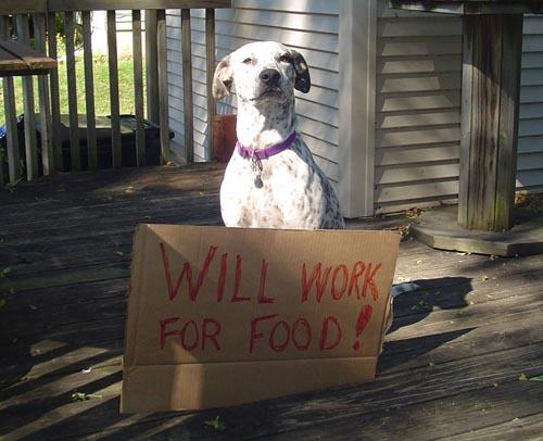Adopt The Right Dog - by Michael Albee - your new dog must fit your lifestyle