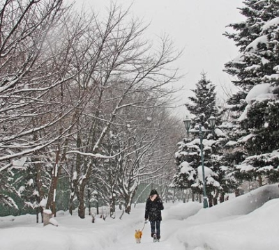 Walking Your Dog In the Winter - Keep your dog safe on the snow and ice