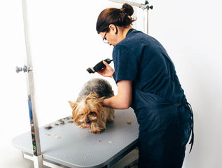 Basic Dog Grooming