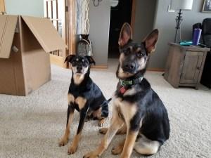 The 2 Minute Dog Training Program