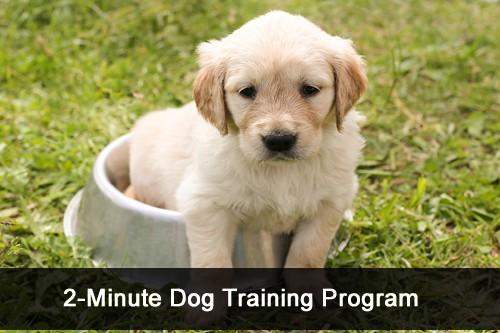 2-Minute Dog Training Program